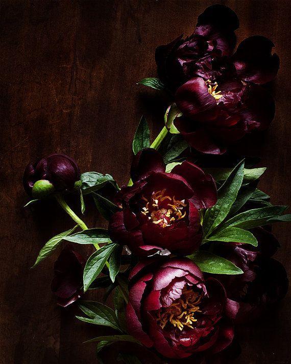 Dark Peonies // Valentine's Day