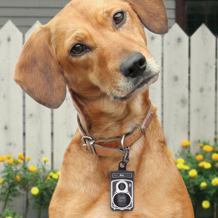 DOIY Rolldog hondenpoepzakjes-dispenser  Description: Als je dol bent op je hond en niks liever doet dat fotograferen dan is de Rolldog hondenpoepzakjes-dispenser helemaal jouw ding. Deze handige dispenser voor aan de halsband heeft namelijk de leuke look van een ouderwetse camera. Hij kan helaas geen foto?s voor je maken maar zit wel boordevol met zakjes die je kan gebruiken om de poep van je hond op te ruimen. Je koopt de Rolldog hondenpoepzakjes-dispenser online bij Ditverzinjeniet.nl…