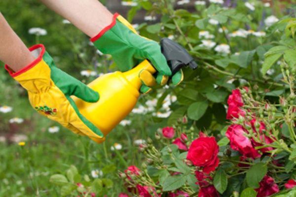 Az ecet igazi csodaszer a kertben, használd te is!
