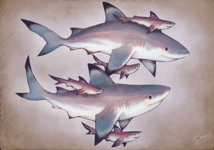 "Blacktip Sharks Family by Doug, Brazil ""My favorite kind of shark are very cute and sociable. It's magical swim with this species! ♥"" {digital, 2012}"