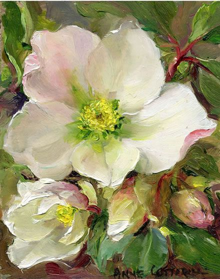Christmas Roses | Mill House Fine Art – Publishers of Anne Cotterill Flower Art