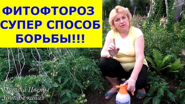 ФИТОФТОРОЗ - Эпидемия началась! Обрабатываем вместе со мной помидоры, ог...