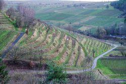 birkweiler kastanienbusch pfalzweinproben | weine, menschen & leben in der Pfalz