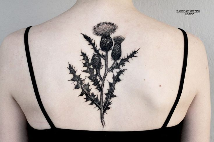 the 25 best ideas about thistle tattoo on pinterest wildflower tattoo wild flowers and types. Black Bedroom Furniture Sets. Home Design Ideas