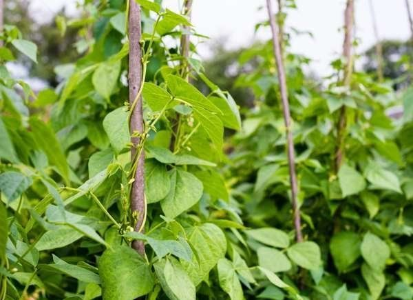 The Fastest Growing Vegetables Fruits And Herbs For 400 x 300