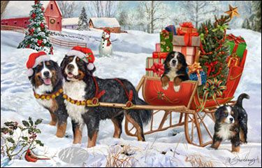--Bernese Mountain Dog - Christmas Delivery
