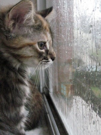 Tras los vidrios turbios/ mirando la lluvia...