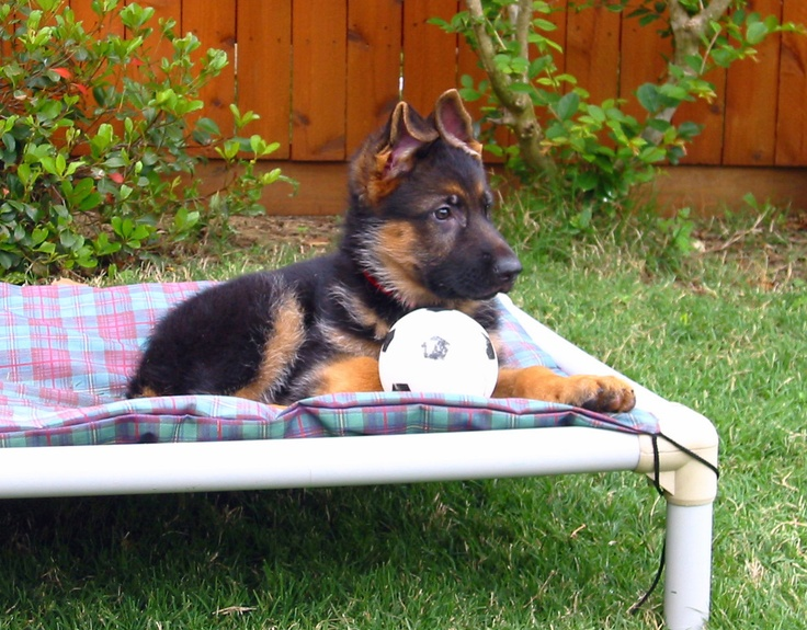 Kuranda Dog Beds--these are good for shephards because they are prone to hip problems and supposedly this bed if proven to help the joints. Great info!