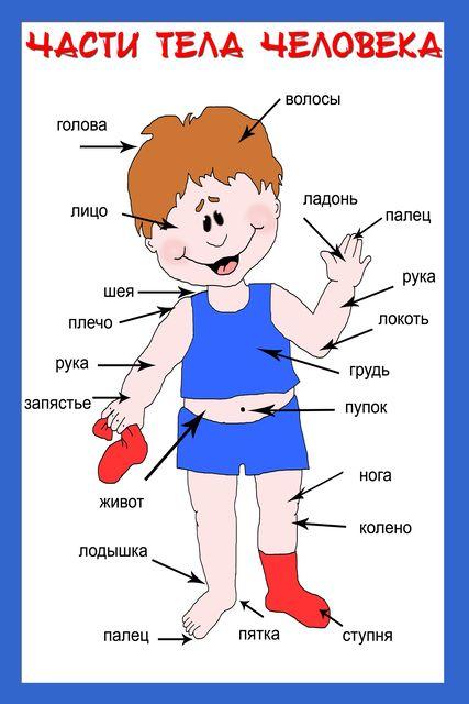 Валеология. Изучаем части тела.