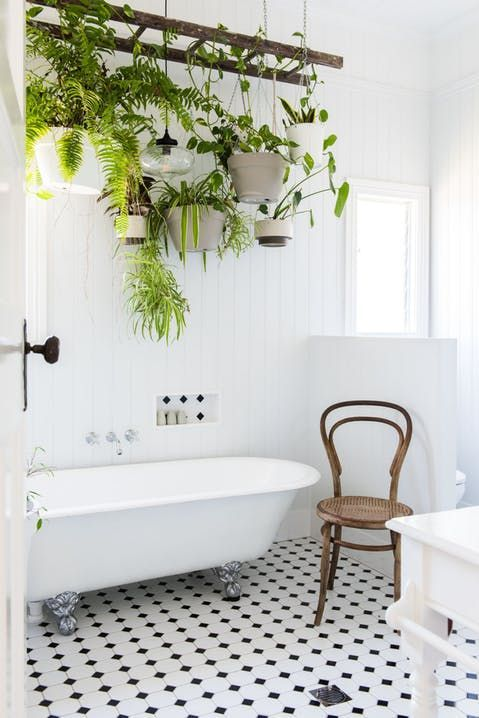 Hanging plants with a clawfoot tub.
