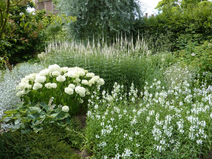 Hydrangea 'Anabelle', physostegia and veronicastrum in the White Garden at Sissinghurst