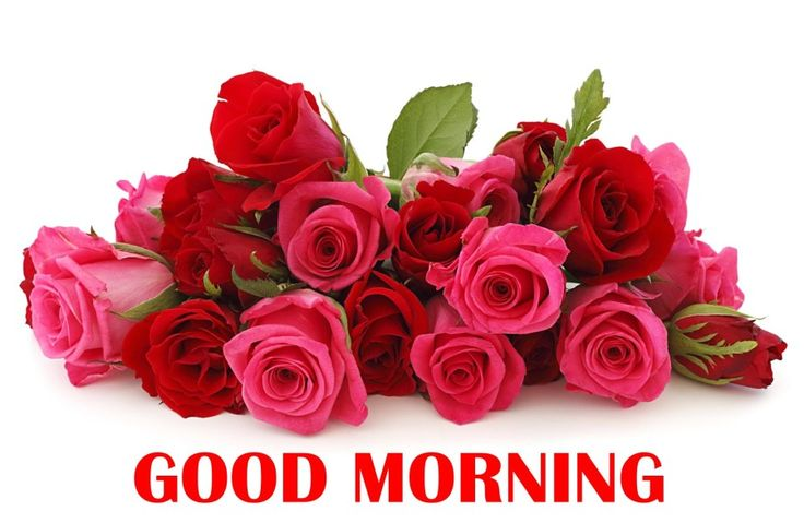 Good Morning Orange Flowers : Good morning rose flowers bunch hd wallpaper