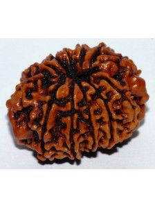 #Rudraksha of 10  faces #mukhi very powerful and can help to it was #overcoming fears and to developing a #healthy #mind. It can help a person to enjoy the benefits of the life, to obtaining the #happiness and the success