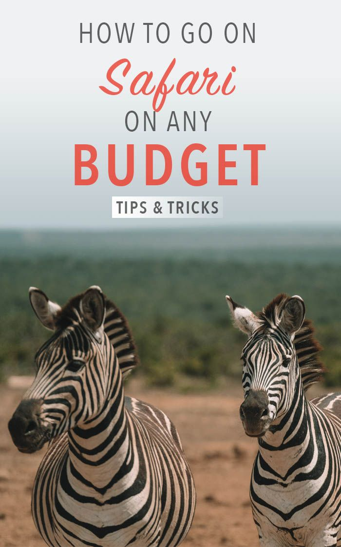 How to go on an African safari on any budget | South Africa