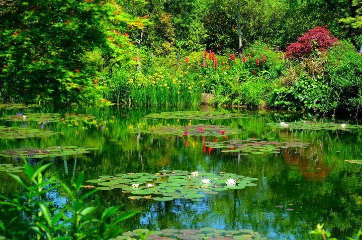"""世界でたった2つだけ!美しすぎる""""モネの庭""""が高知県に存在した"""