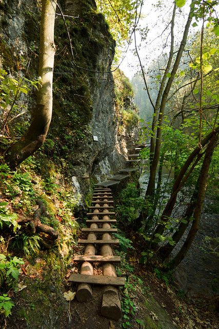 The wooden path in Slovenský Raj National Park, Slovakia