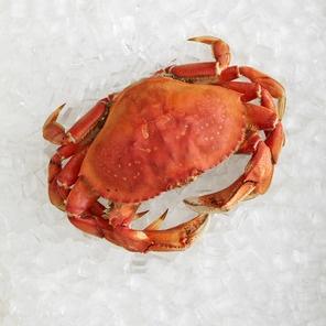Oregon Coast Crab Cakes Recipes