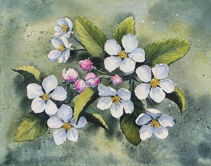 Edyta Nadolska Watercolor Art - 'Apple blossom'