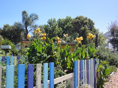 Another little sojourn on Saturday. This time, Veg Out Community Gardens in St Kilda.