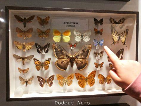 #Museodelfiore #Acquapendente #museum #maremmaforkids
