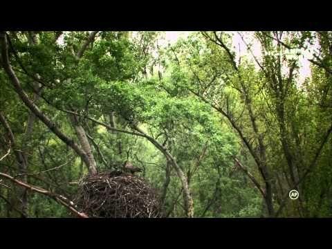 Az ártéri erdő titkai 720p - YouTube