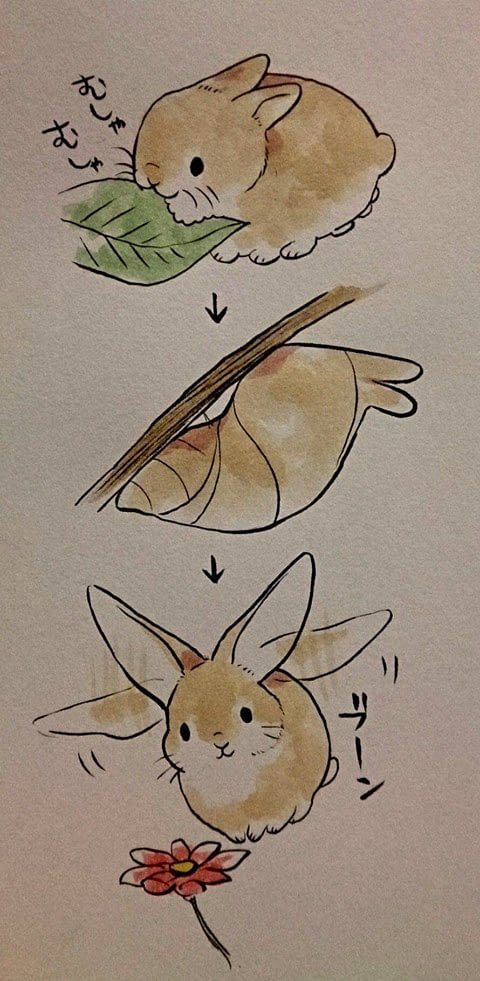 Life Cycle of a bunny