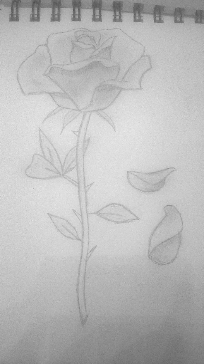 This is a picture of Intrepid Rose Petal Drawing