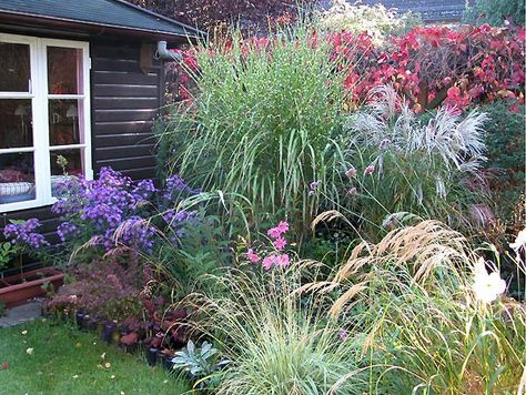 Ziergräser Im Garten über 1 000 ideen zu ziergräser auf gras mehrjährige pflanzen und gärtnern
