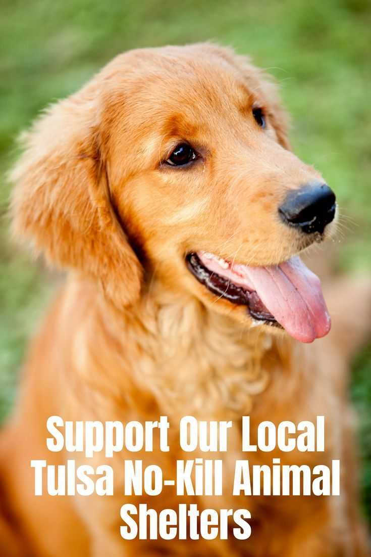 Our Local No Kill Animal Shelters Provide A Often Overlooked