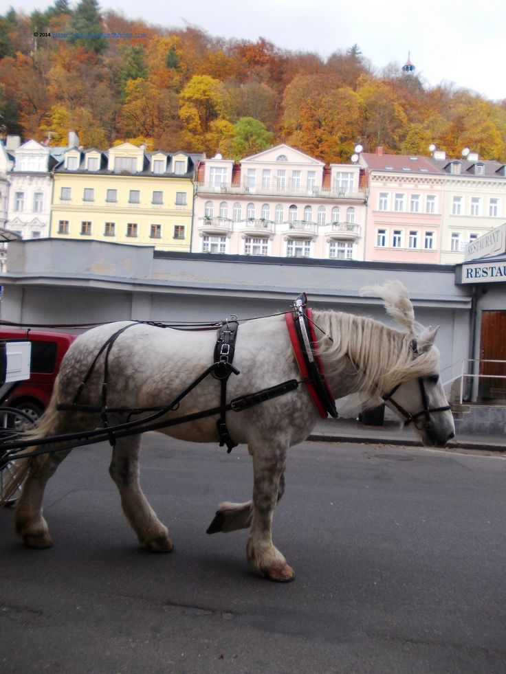 Karlovy Vary, the horse's view