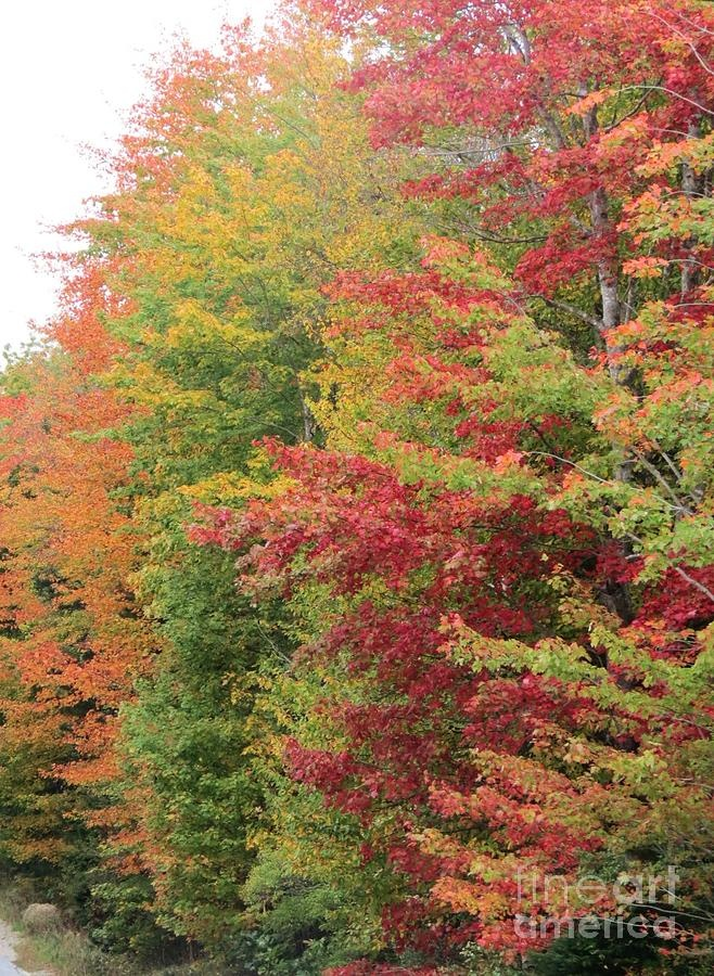 ✯ Fall in Maine