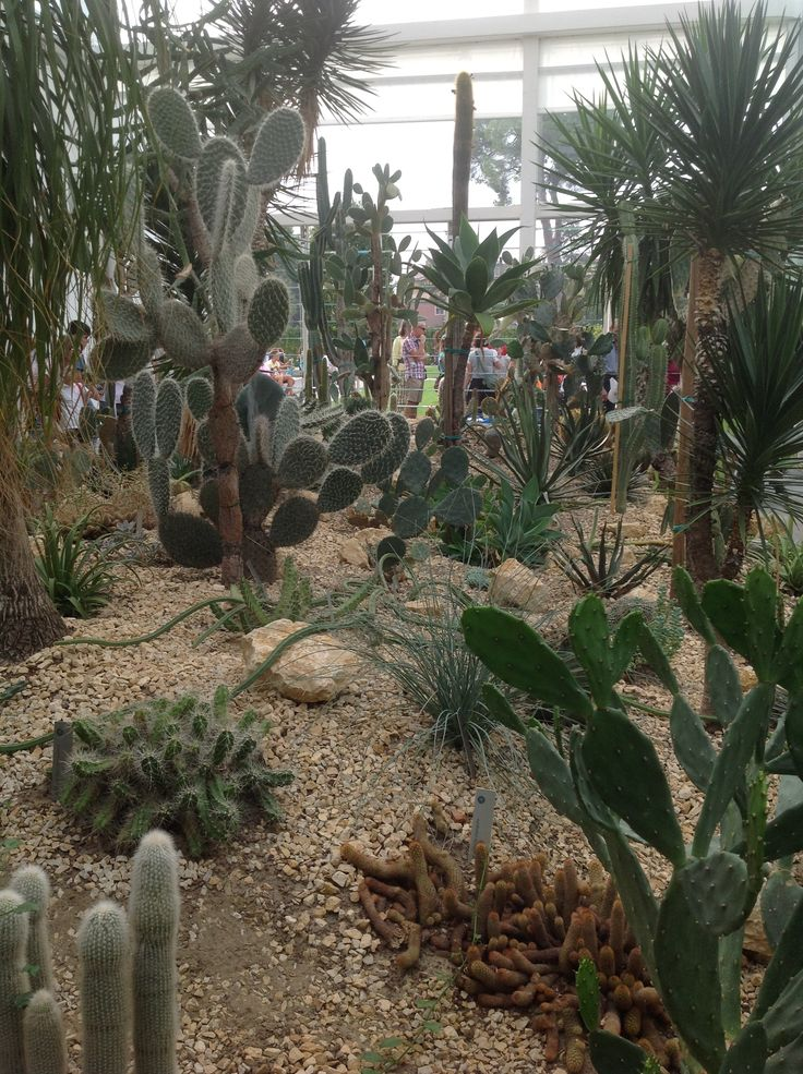 Padiglione piante grasse, Orto Botanico Padova Italy