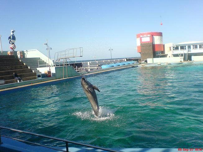 Dolphin, PE
