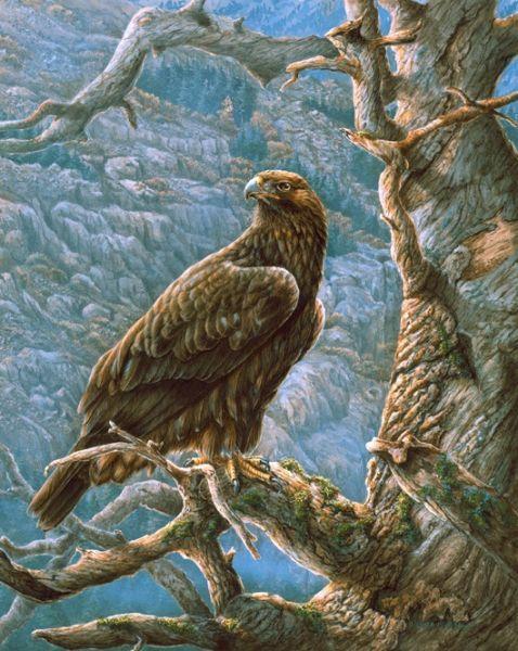 brown hawk ~ Mountain Majesty by Wanda Mumm