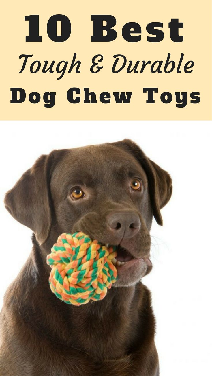 10 Best Toughest, Durable Dog Toys For Heavy Chewers
