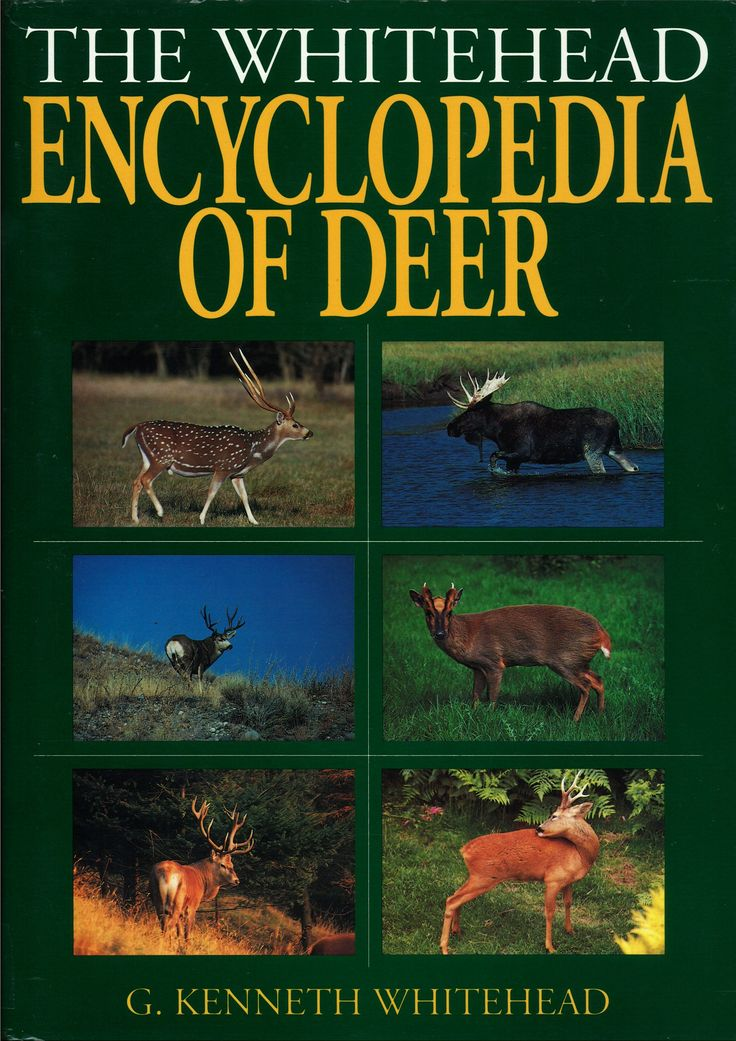 The Whitehead Encyclopedia of Deer by G Kenneth Whitehead | Quiller Publishing. A source of information all about the world's deer species, their distribution and every aspect of their biology, mythology, iconography and their place in the history and current practice of deer hunting and stalking. Every imaginable aspect of these mammal's lives, lore and behaviour has been investigated in detail. #deer #encyclopedia