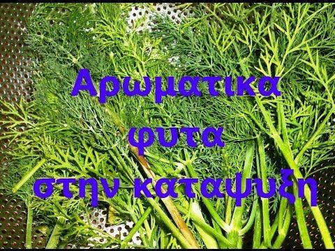 Αρωματικά φυτά στην κατάψυξη - YouTube