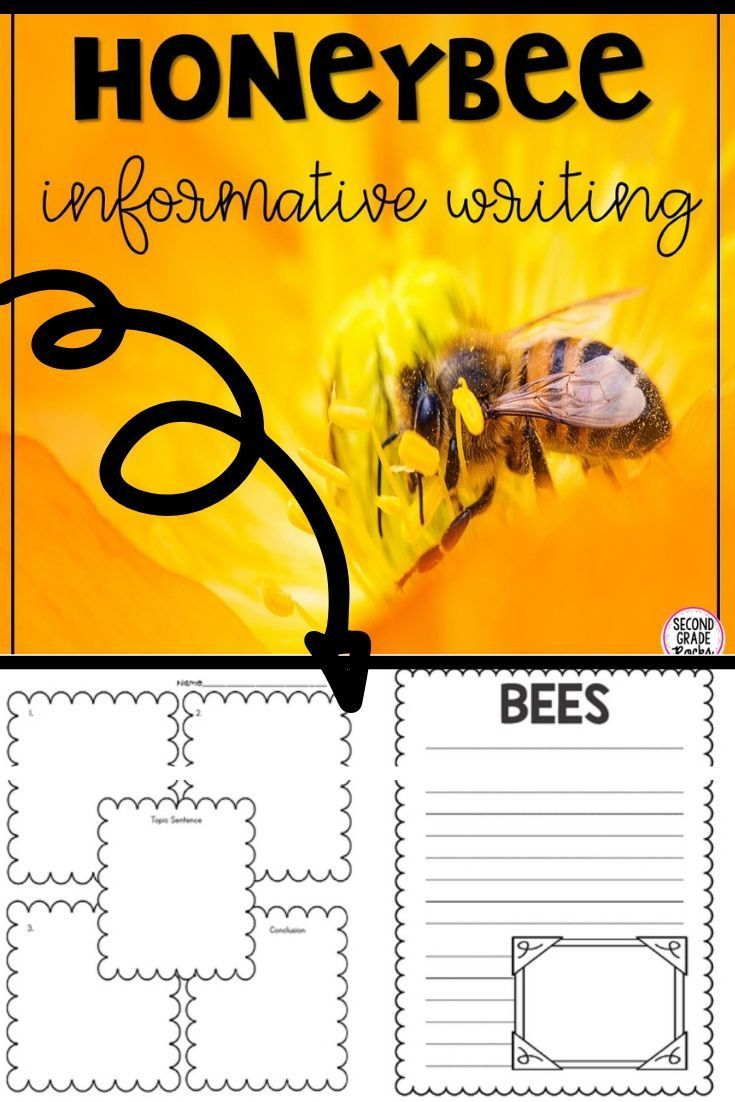 Honey bee activity for the classroom. Great resource for writing and  learning about honey be…   Informational writing [ 1102 x 735 Pixel ]