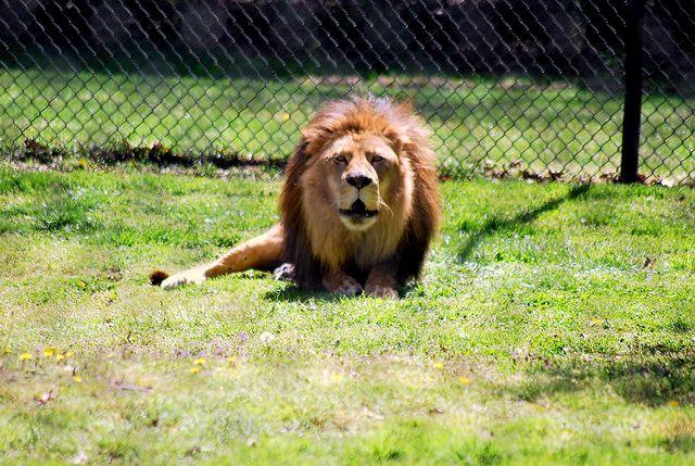 Cape May County Zoo, Cape May, NJ #travel #daytrip