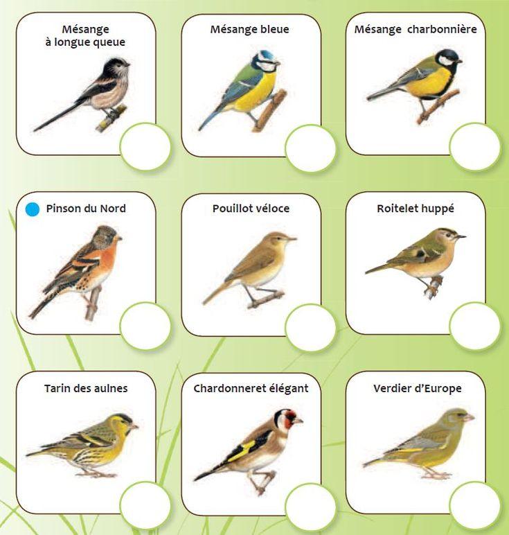 Les 18 meilleures images du tableau moi reconna tre les for Oiseaux de nos jardins belgique