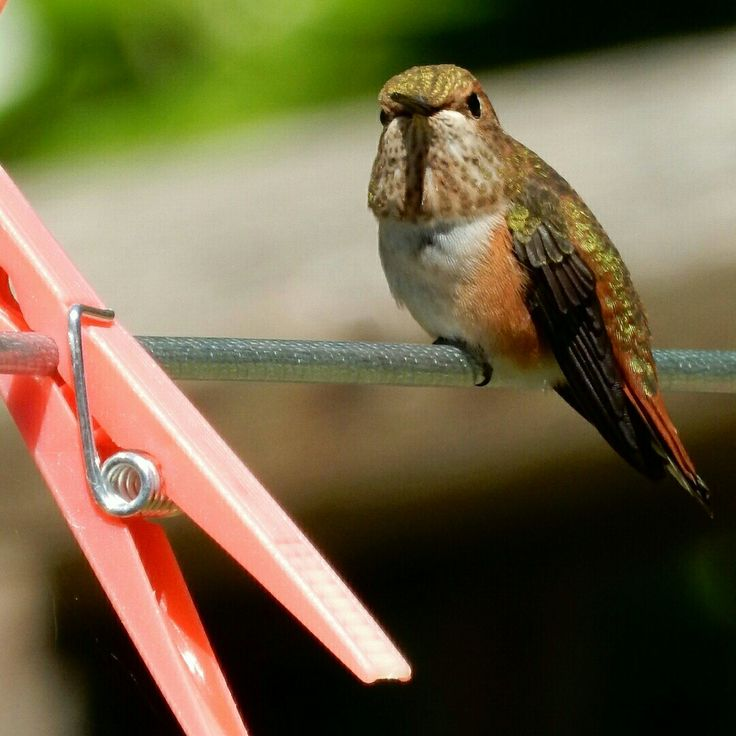 Humming bird by angelindaskyz