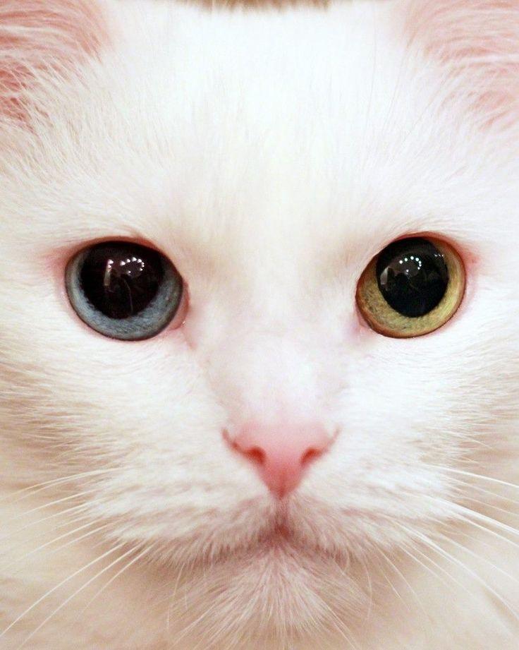 Odd-eyed