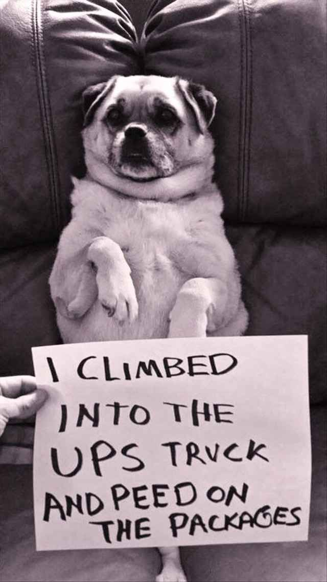 35 Of The Most Hilarious Pet Confessions - BlazePress