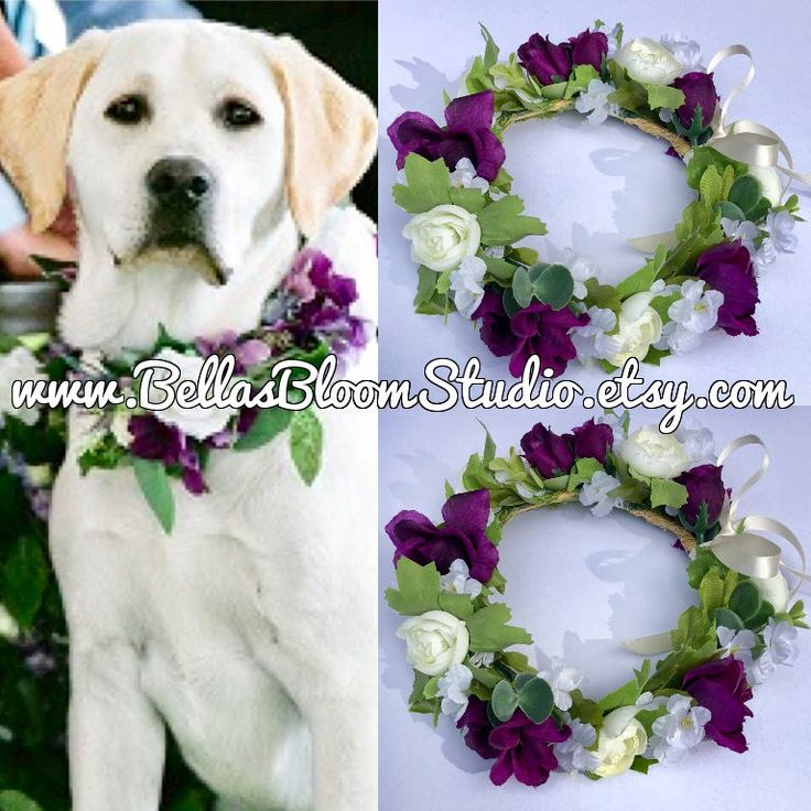 Excited to share the latest addition to my #etsy shop: Dog Of Honor Dog wedding collar Pet Wedding Attire Dog flower crown wreath Dog flower girl Dog collar purple dog collar etsy wedding http://etsy.me/2Daa2qD #pets #white #wedding #purple #dogweddingflower #dogringbe
