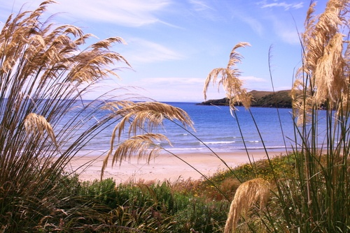 Lee Bay / Stewart Island / NZ