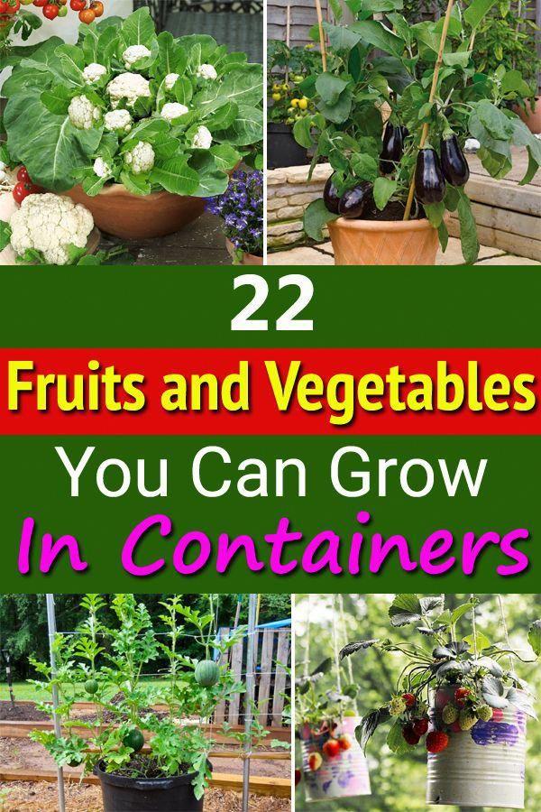 Container Gardening Ideas For Patio Containergardeningideas