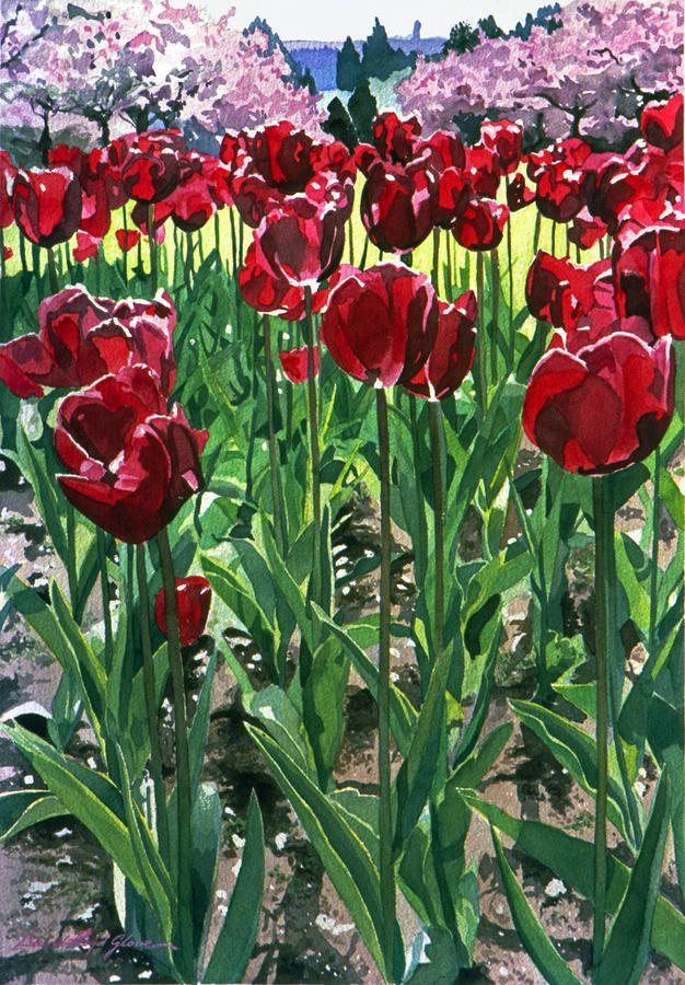 David Lloyd  — Glover Claret Tulips  (626x900)