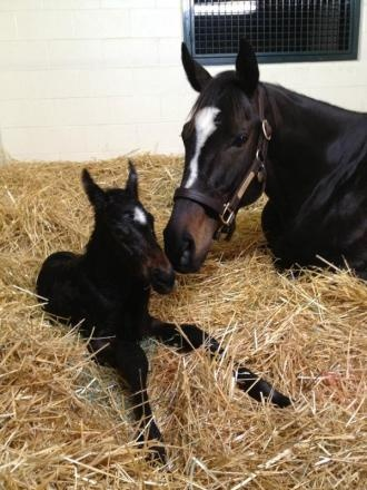 LOVE ZENYATTA...even had postal stamps made with her on them!!!!  2010 Horse of the year Zenyatta and her 130 pound colt born 3/8/12 at Lane's End Farm in Versailles, KY.
