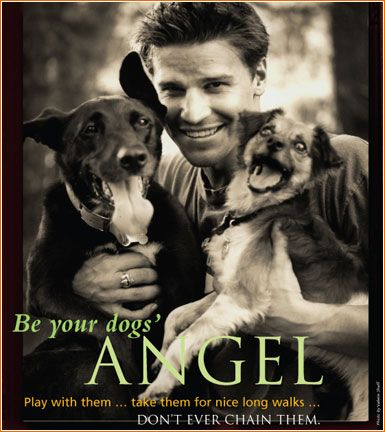 I should start a new board of hot guys with dogs. [David Boreanaz]