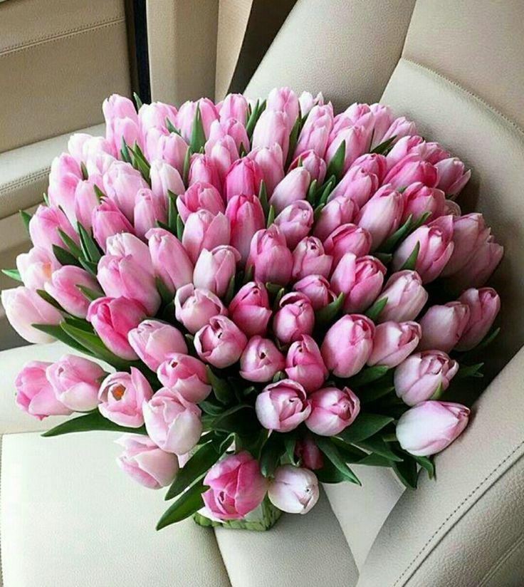красном картинки с большими букетами тюльпанов этом видео